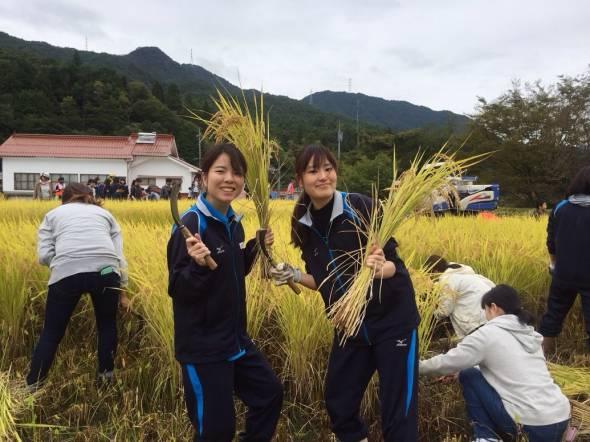 収穫ボランティア